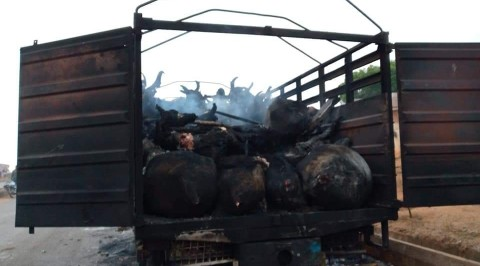 Angry Mob Set Cattle Worth Millions of Naira Ablaze in Oyo