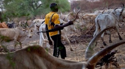 Alleged Herdsmen Killings (Delta Community Exhume 6 Corpse of Killed Farmers)