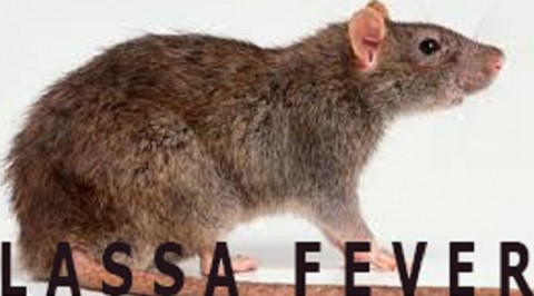 Lassa Fever: One Confirmed Dead From Lassa Fever in Kaduna