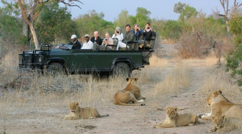 5 Lions loose in South Africa, kills livestock