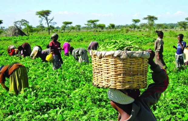 Stakeholders Call for Synergy Between CBN, Agric Ministry