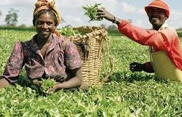FG offers N2b loan for farmers