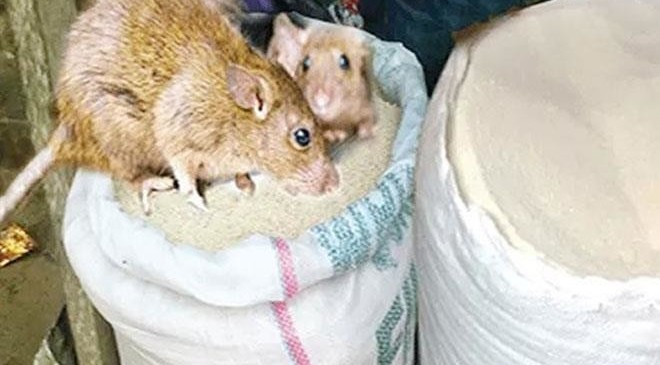 LASSA FEVER: Ondo State Government Prohibits Open Display of Food Items, Sets Up Enforcement Committee