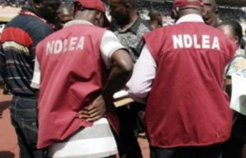 NDLEA so far arrested 219 suspected drug dealers in Adamawa