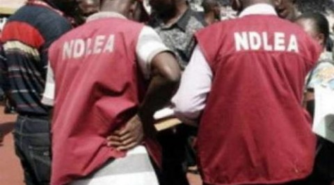 NDLEA nabs 2 over 2,000kg of cannabis