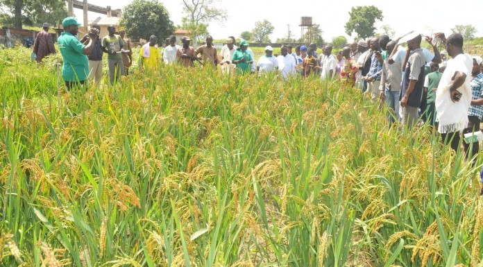 Abia government empowers farmers