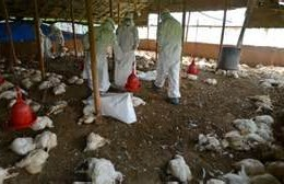 Ogun govt confirms outbreak of bird flu