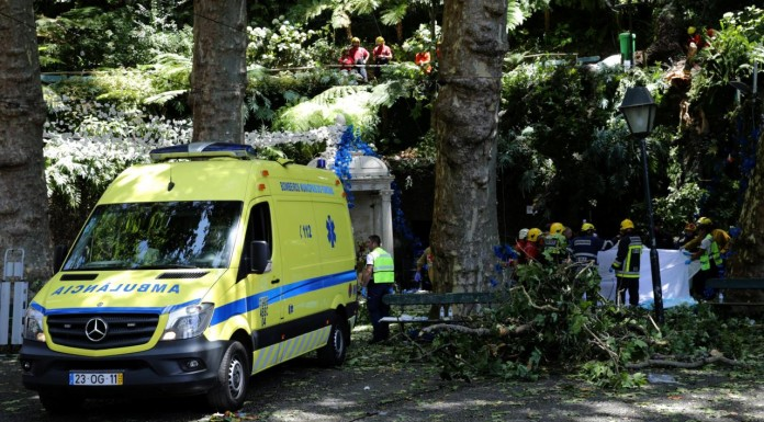 falling tree kills 12 worshipers in portugal
