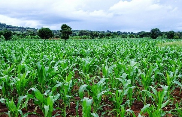 Students to own farm in Anambra