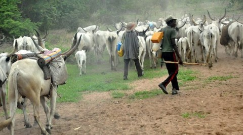 Displaced victims of herdsmen attack cry out