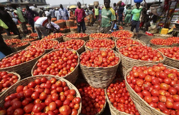 CBN, Kaduna Governor Flag-Off N10 Billion Tomato Company