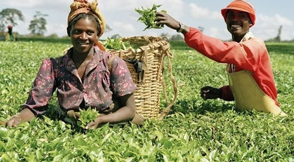 Farmers call for loans to boost productivity