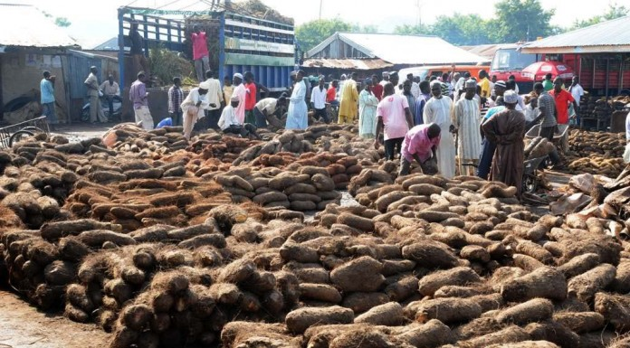 Traders lament FG yam policy