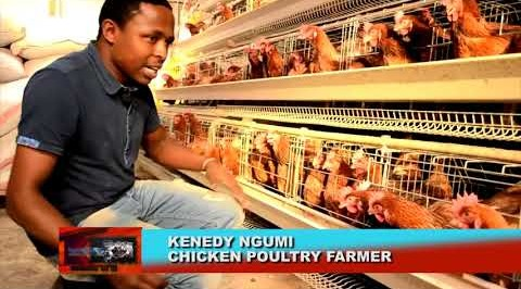 How to make huge profit from poultry farming