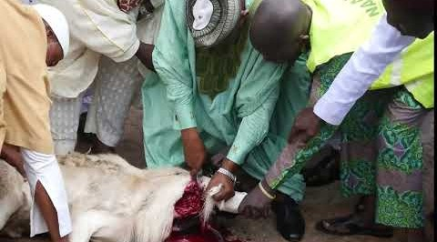 Chief Imam slaughters ram for Ed-el Kabir celebration