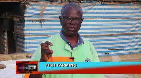How to make profit from fish farming